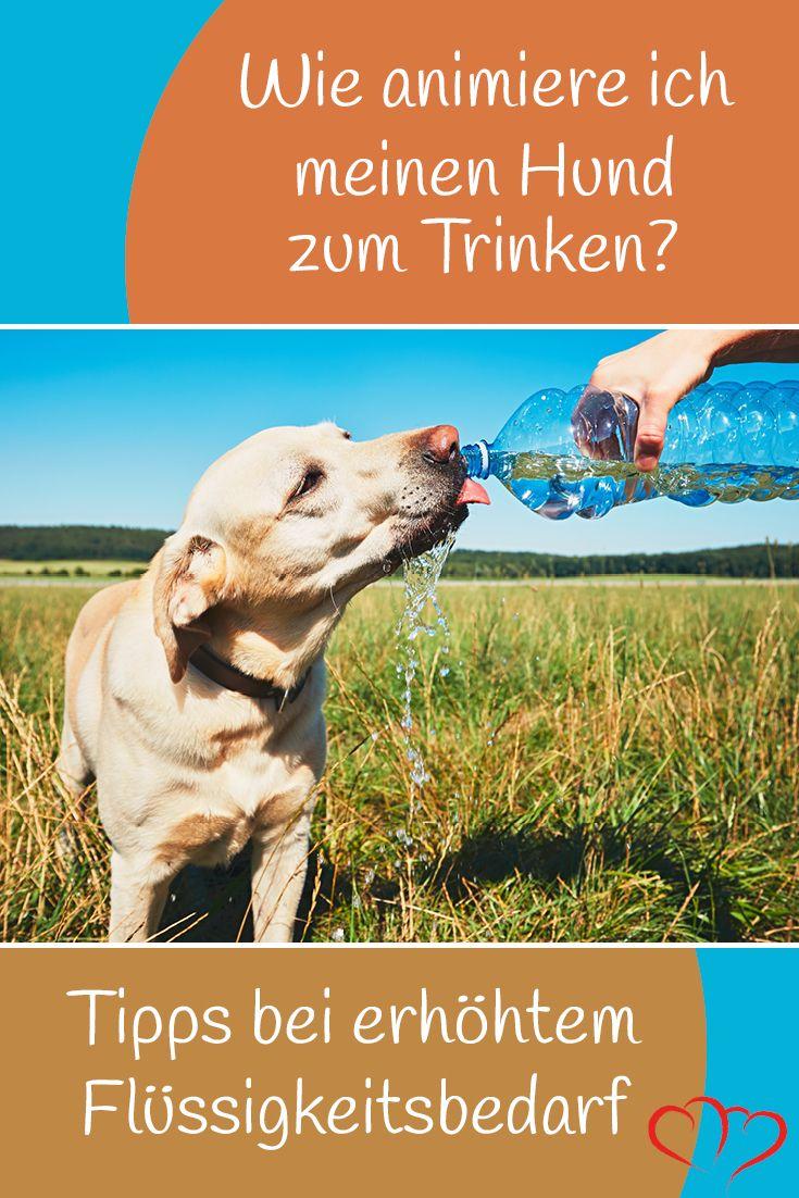 Wie Trinken Hunde