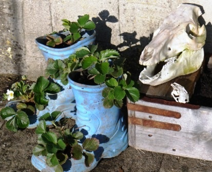 Recycled Welly Boot Planters