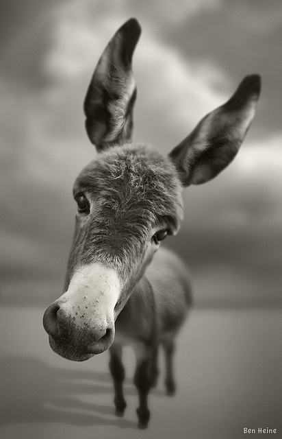 AhwwwPhotos, Except, Pets, Creatures, Ears, Donkeys, Ass, Funny Animal, Smile