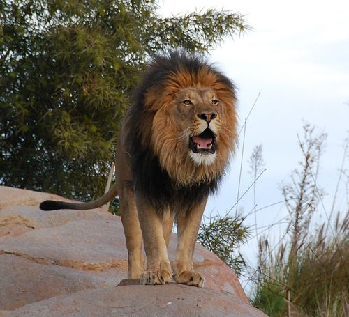 Flickr Search: wild animals | Flickr - Photo Sharing!