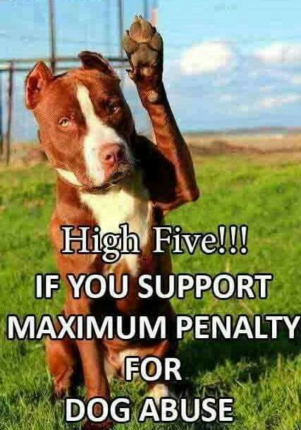 ✋Hell Yes! Harsh penalties to those weak scared shitheads. Love animals unconditionally, love humans, maybe!