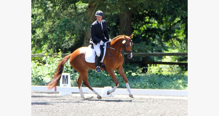 Dancier's Dream DMV. 2015 USDF All-Breeds Champion at Training Level.    Find your dream horse at www.dreamcatchermeadows.com    #equestrian #horse #dressage