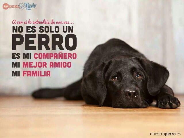 Un perro fiel