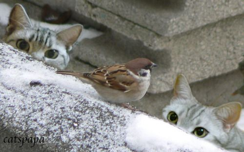"* * "" Either dat bird beez blind or haz super powers ! """