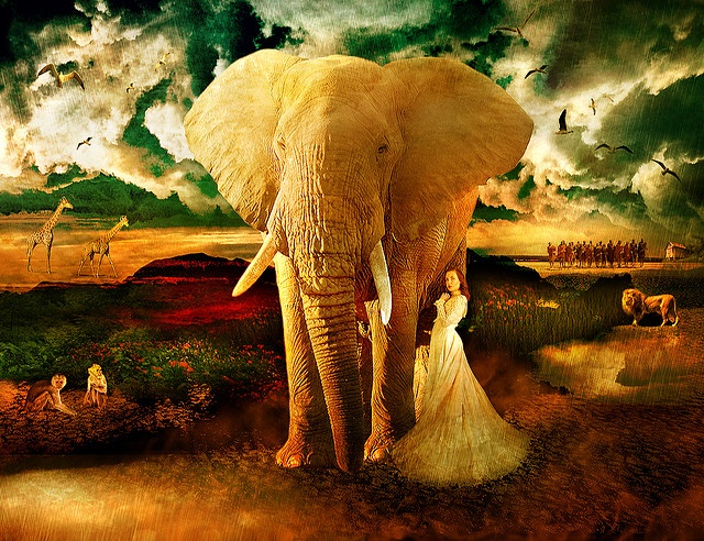 elephantAfrica Mía, That Girls, Elephant Art, Animal Elephant, African Safari, Art Photography, Africa Pictures Maps, Elephant Faith, Africa Growth