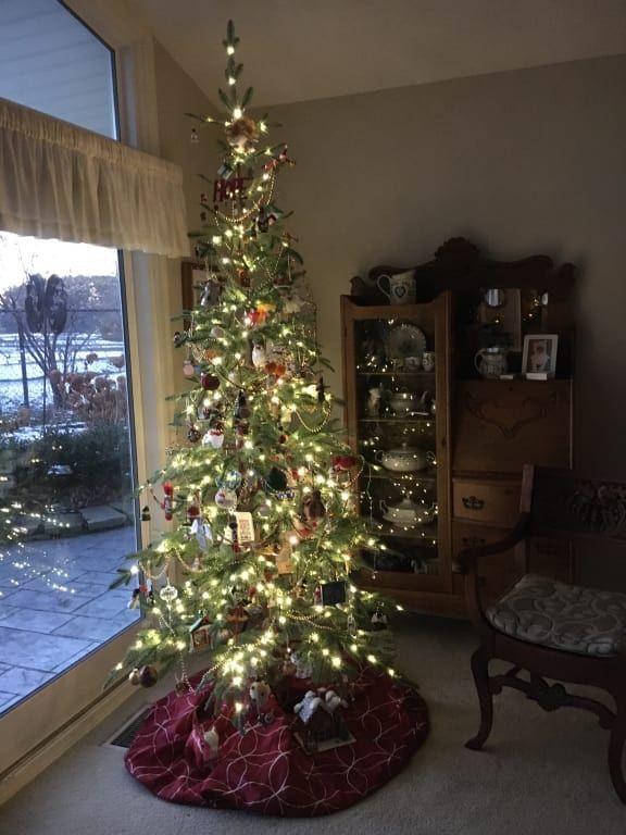 Alpine Balsam Fir Christmas Tree Balsam Hill Fir Christmas Tree Balsam Fir Christmas Tree Christmas Tree