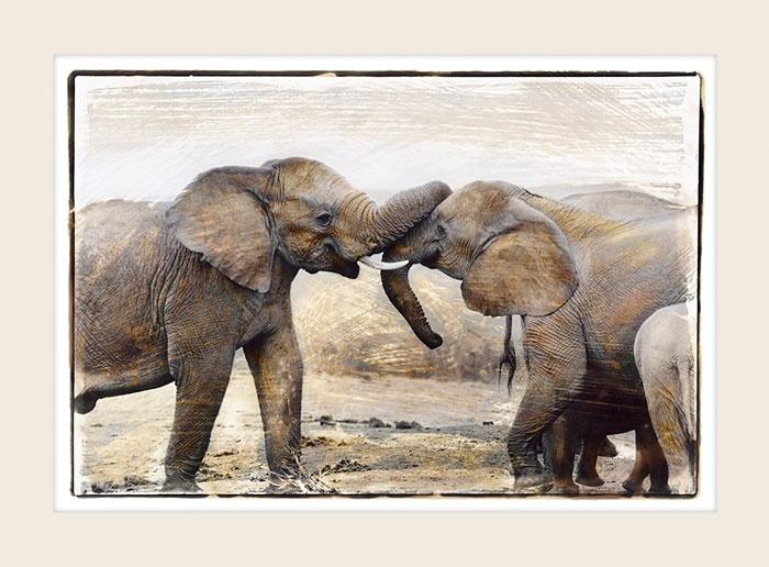 African Wildlife - Conversation - Marlene Neumann Fine Art Photography  www.marleneneumann.com  neumann@worldonline.co.za