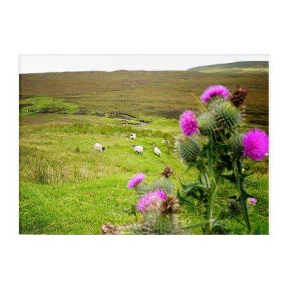 Scotland Highlands Thistle Landscape Acrylic Panel Acrylic Wall Art - travel photos wanderlust traveling pictures photo