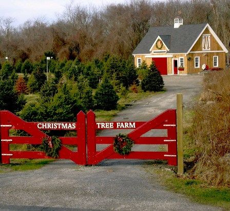 Christmas tree farm - Love the mustard yellow siding and red door on the building.