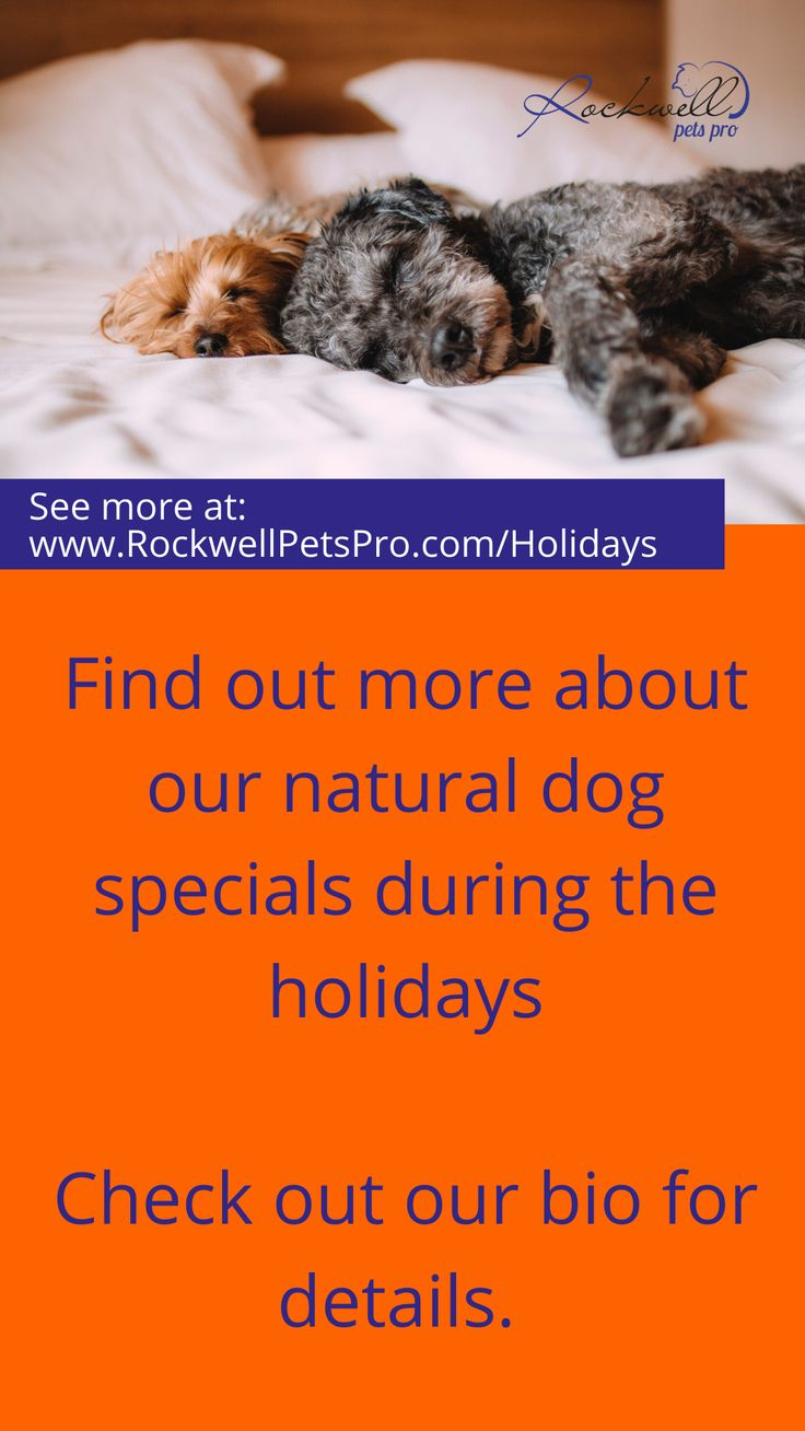 Holiday special with images natural dog natural dog