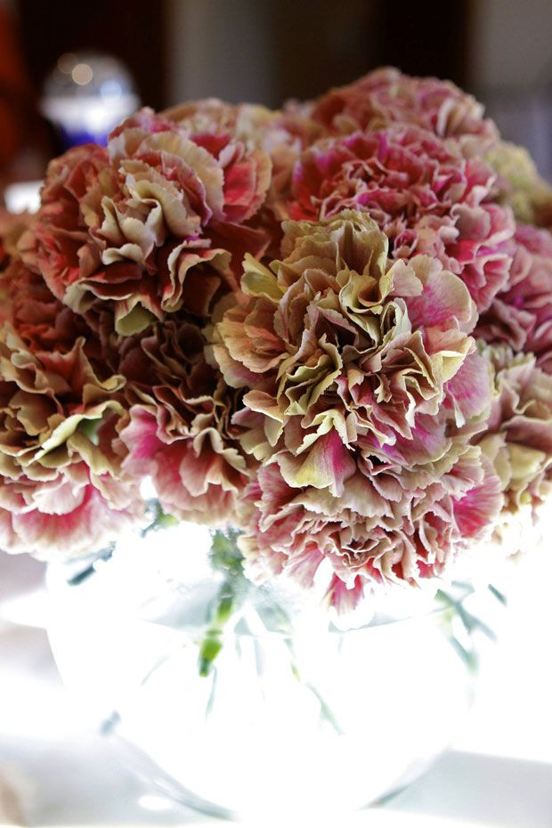 We Found Love: Carnations | Eat • Drink • Garden • Santa Barbara, California