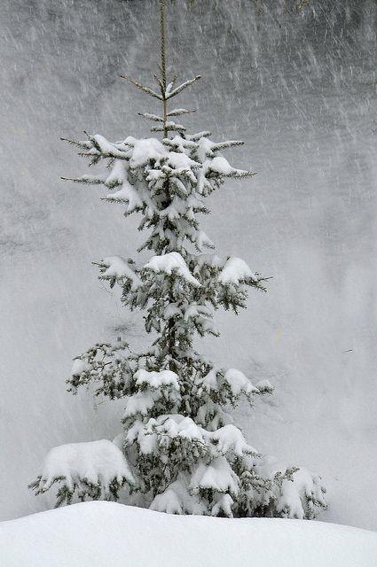 Let it snow.../