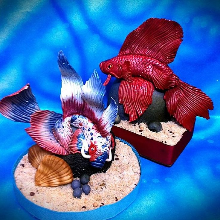 Siamese Fighting Fish Cake by Timbo Sullivan........For more info, Please visit: https://cakerschool.com/