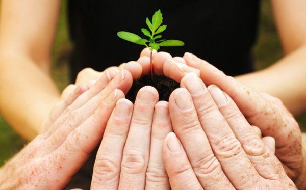 40 Eye-Opening slogans on Save Trees - Berlinroots