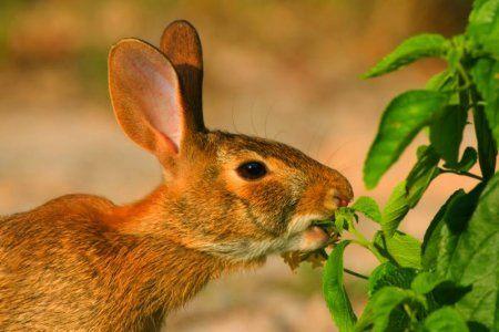 Deer Rabbit And Plants On Pinterest