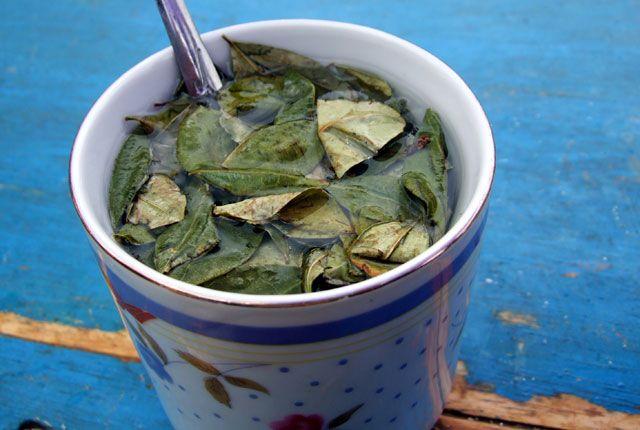 Té sagrado: el té de coca