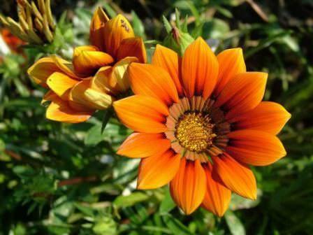 правильный уход за цветами — своевременное удобрение