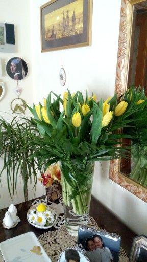 Tulipani gialli. Wow