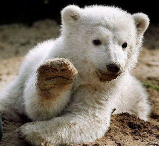 Η Χιονάτη και τα εφτά μυστικά περάσματα : Το «ξύπνημα της αρκούδας»
