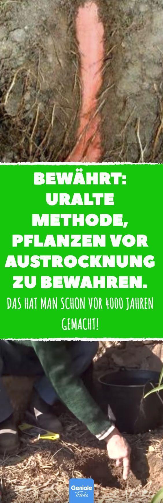 Bewährt: uralte Methode, Pflanzen vor Austrocknung zu bewahren. #garten #sommer… Dennis Oldenburg