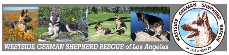 Westside German Shepherd Rescue of Los Angeles is a non profit 501(c)3, no kill rescue committed to saving  all types of German Shepherd Dogs from high kill shelters and adopting them to loving, qualified homes.