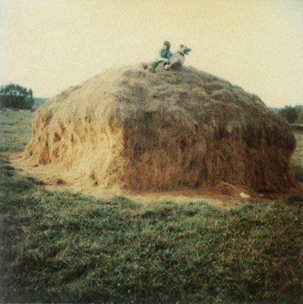 Poemas del río Wang: Tarkovsky's Polaroids / Las Polaroid de Tarkovsky