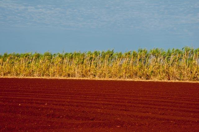 Sugar Cane Plantation, Hummocks Farm - Bargara, Queensland