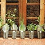cultivar ervas dentro de casa 1