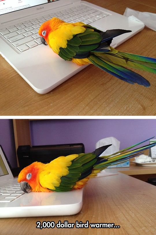 Look how happy this little birdie is to be on the warm laptop! GAH! So cute.