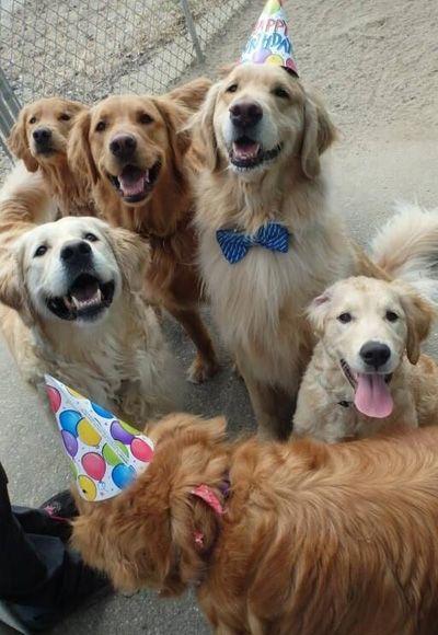 Revista Meu Pet - A revista que todo mês traz matérias incríveis para deixar seu bichinho saudável e feliz.<!--11 imagens de cachorros que adoram uma festa de aniversário Home COMPORTAMENTO -->