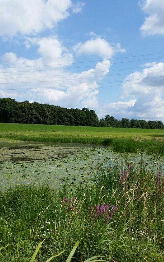 Zicht op dijk . Ter hoogte van Oosterhout