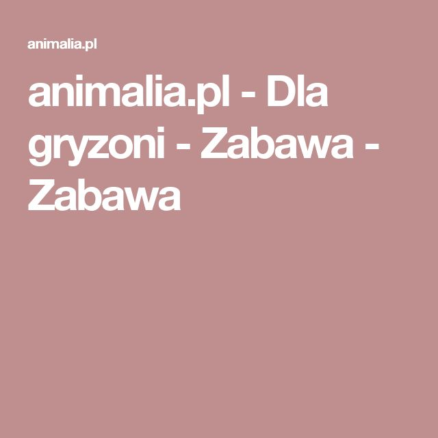 animalia.pl - Dla gryzoni - Zabawa - Zabawa
