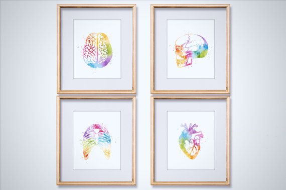 Watercolor Anatomy Art Print Set - Medical Student Gift - Anatomy Decor - Medical Art - Heart Anatomy - Skull Anatomy Art