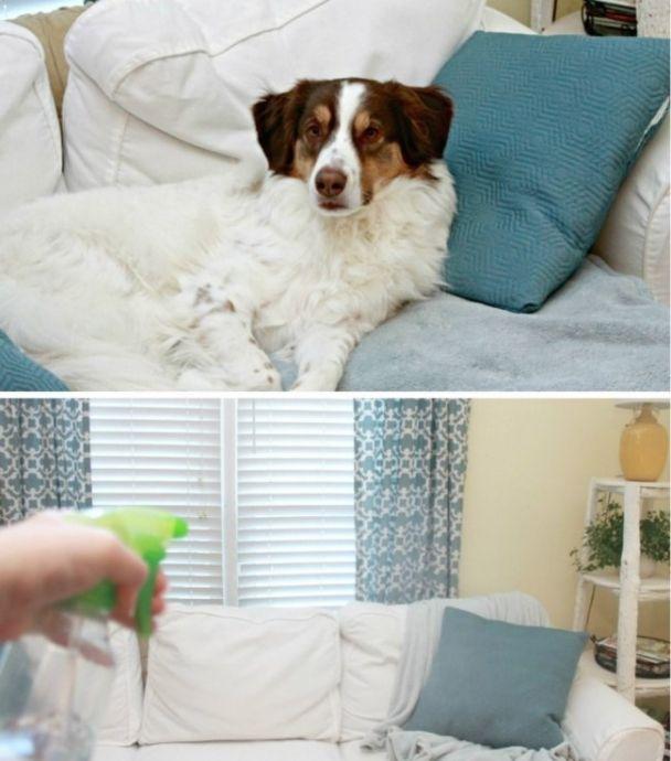 Чтобы избавиться от запаха домашних животных или просто освежить мебель 0