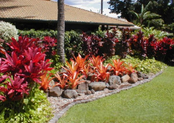 Privacy, Color, & a tropical flare describes this landscape border alongside a home. This flower bed is not only stunning, but easy to maintain!