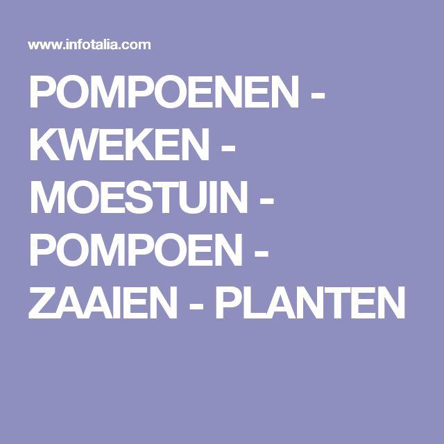 POMPOENEN - KWEKEN - MOESTUIN - POMPOEN - ZAAIEN - PLANTEN