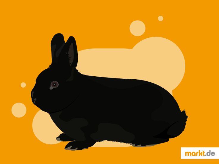 Das Alaska-Kaninchen im Portrait | markt.de #alaskakaninchen #haltung #zucht #pflege #kaninchen #kaninchenrassen #charakter #aussehen #geschichte #rabbit