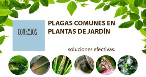 Best 25 plantas para exterior ideas on pinterest - Plantas para exterior ...
