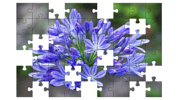 Free Jigsaw Puzzle Online - AGAPANTHUS  #Game #JigsawPuzzle #Puzzle #jigsaw