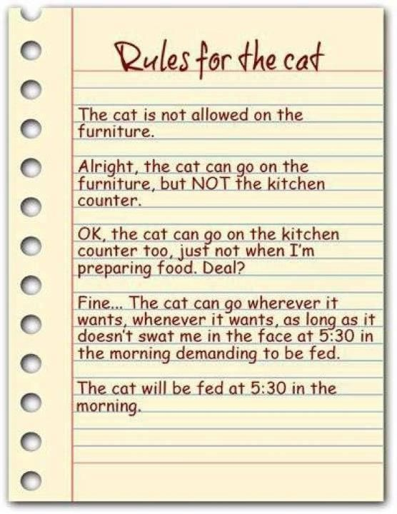 Rules for the cat: Cats, Cat Rules, Animals, Funny Stuff, So True, Crazy Cat, Kitty, Cat Lady