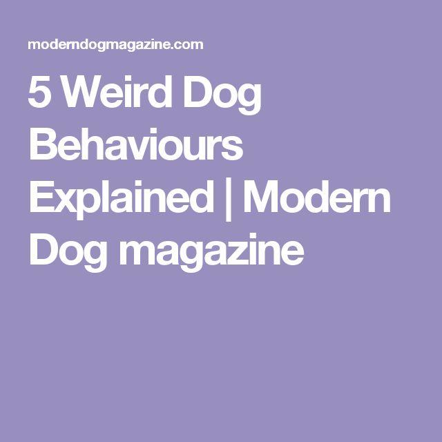 5 Weird Dog Behaviours Explained | Modern Dog magazine