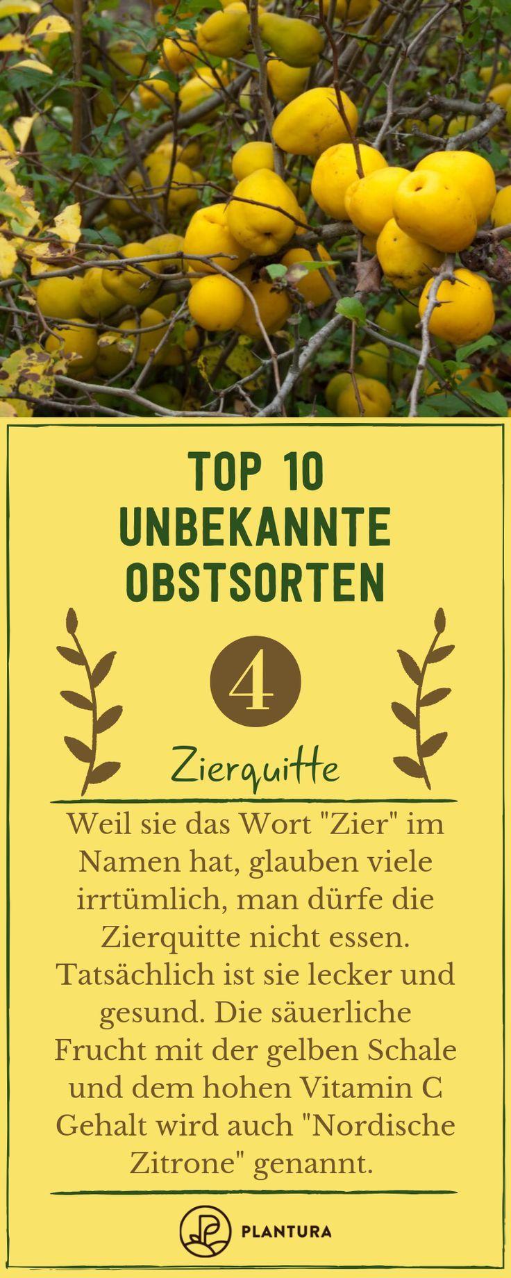 Unbekannte Obstsorten: 10 ungewöhnliche & exotische Sorten – #exotisch #frucht …   – Anbau Gartenhaus