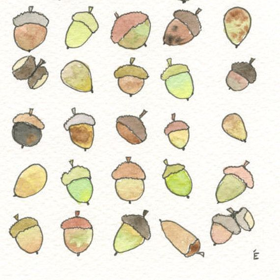 Original illustration of acorns in ink pen and watercolours by EmilieOillustration