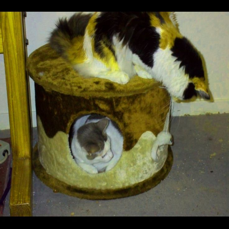 Senior Cat Condo House Furniture For Indoor Large And