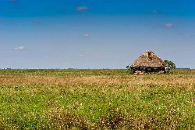 Hungarian plain