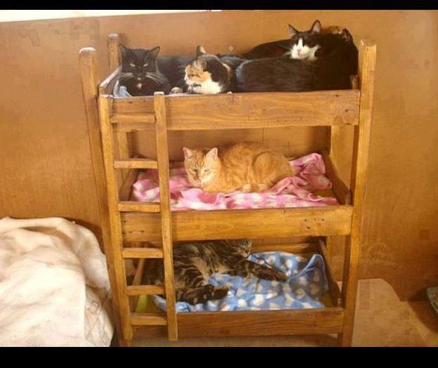 Kitty bunk beds join cat lovers - Sofas para gatos ...