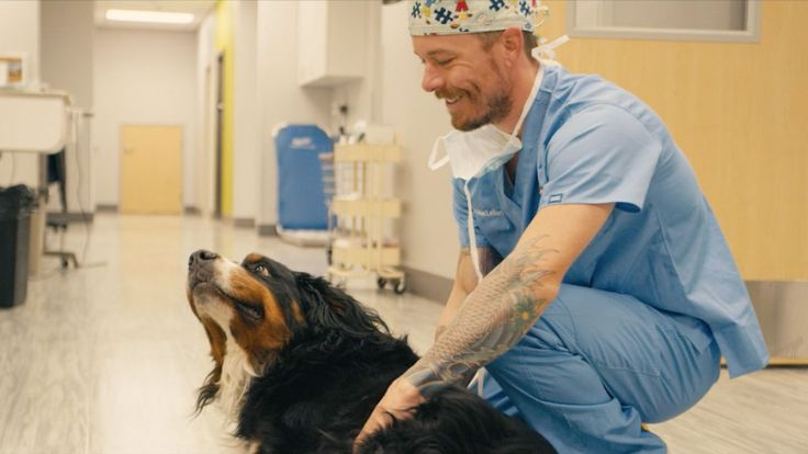 In Reno;s Sierra Veterinary Specialists and Emergency Care