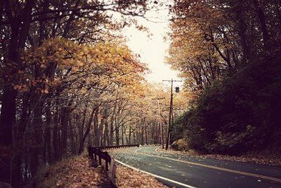 ...: Autumn Dreaming, Picture, Autumn Roads, Country Roads, Nature, Beauty, Favorite, Place, Photography