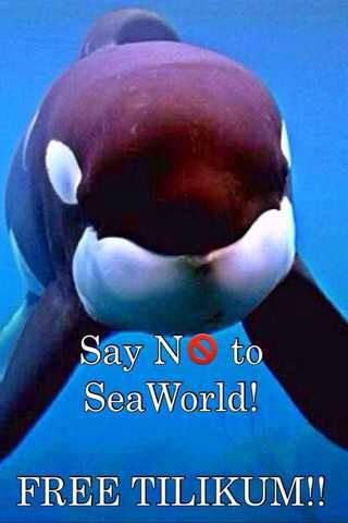 WE NEED MORE SIGNATURES!! 831,341 NEEDED!!! PLEASE SIGN IF YOU HAVE NOT SIGNED ALREADY!! PLEASE TILIKUM NEEDS YOU!!!!