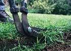 Trim lawn edges: How to cut clean lawn edges